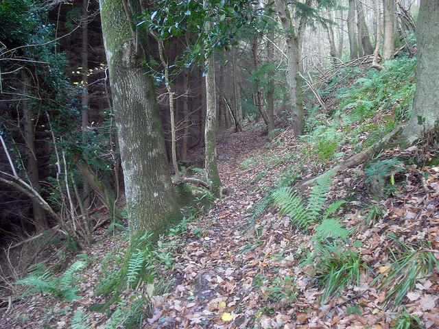 Footpath in Pokeshouse Wood - 2
