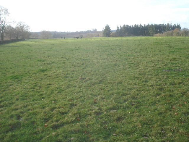 Grazing land at Lucton Common