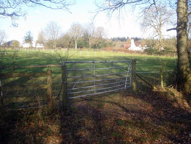 Paddocks at Hill Farm