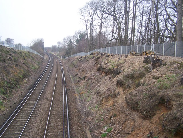 Coppiced trees on railway cutting
