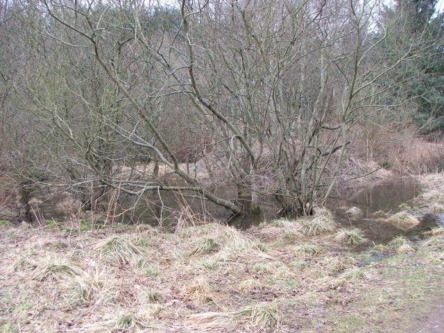 Flooded Quarry Area in Pitcaple Woods