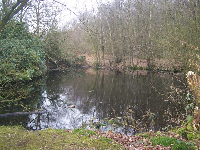 Dark Water Pond in Hall Wood