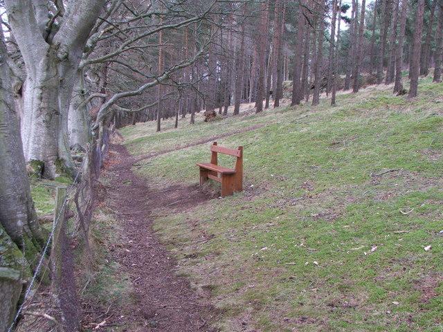 Wooden Bench in Pitcaple Woods