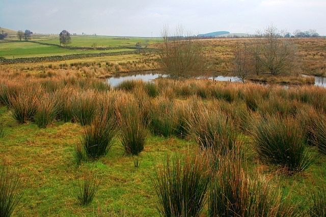 Pond, Askew Rigg Farm