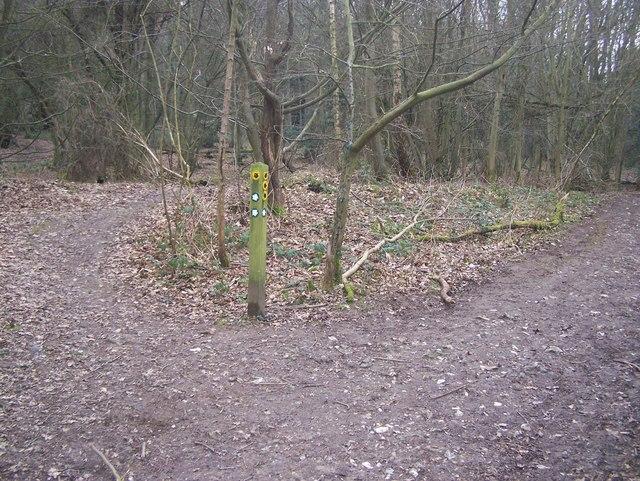 Footpath Junction in Nine Horse Wood