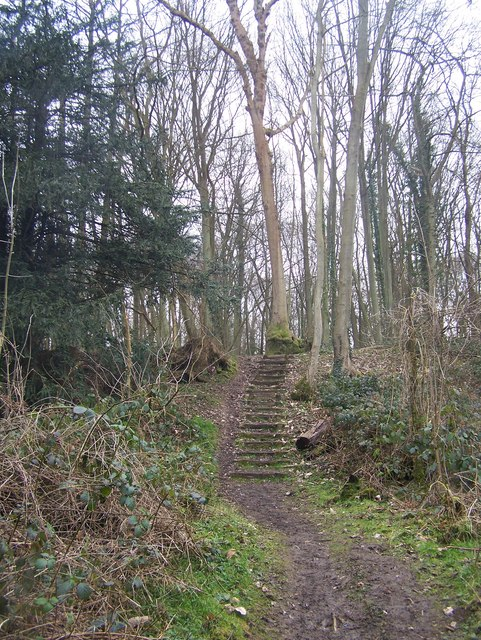 Steps on footpath in Nine Horse Wood
