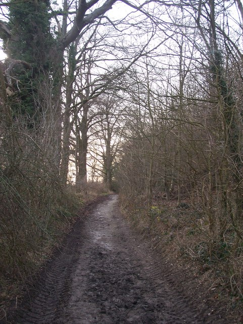 Byway in White Ash Wood