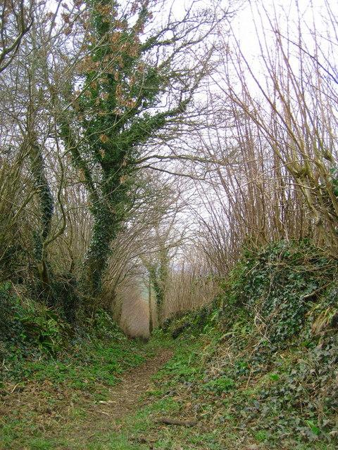 Green lane on the Ridge