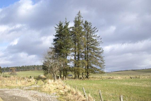 Track north by Claydykes