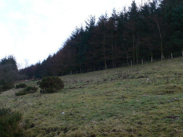 Westernmost edge of the Llandegla Forest