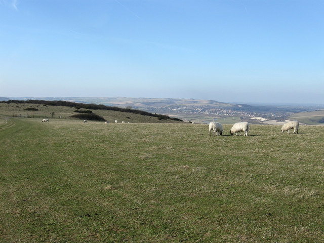 Grazing on Beddingham Hill