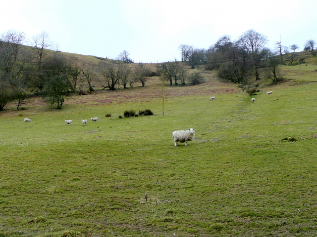 Eastern slopes of Pen-y-ffridd