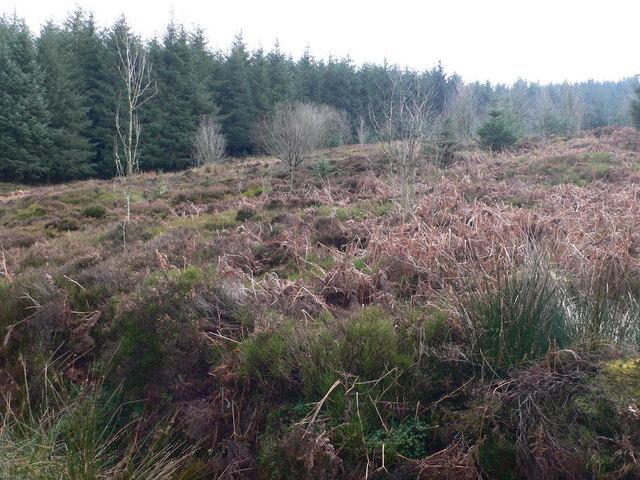 Clearing in Llandegla Forest