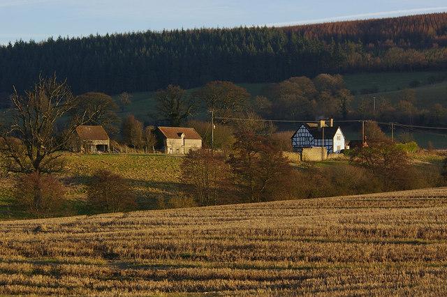 Hill Halton
