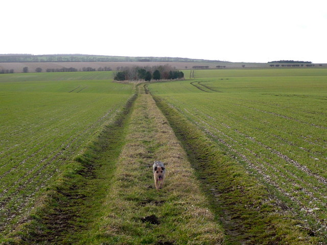 Track on East Heslerton Wold