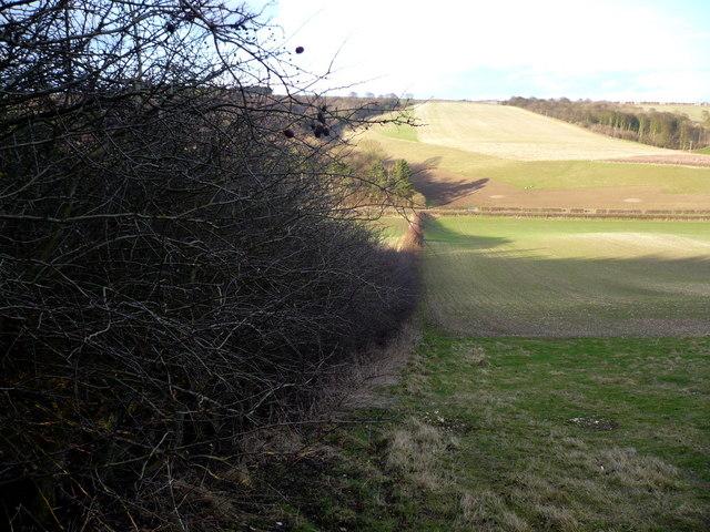 Field boundary in Newton Dale near Wintringham