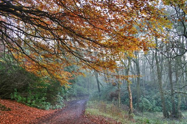 Autumnal Bridleway in Holme Wood