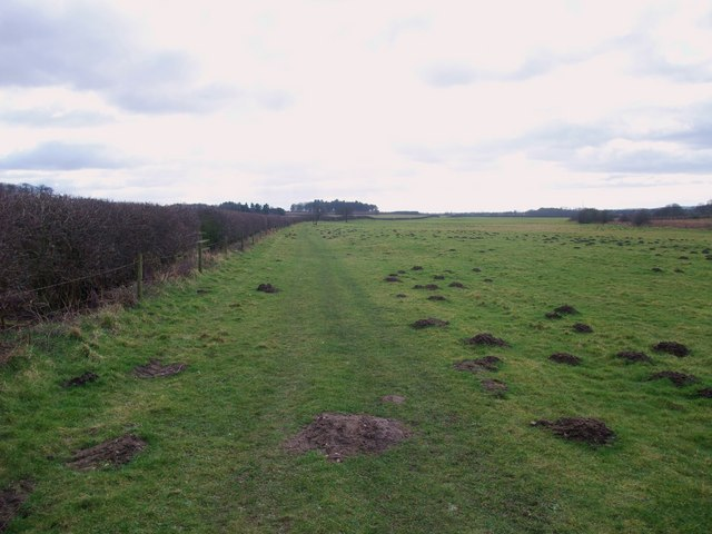 Footpath and molehills south-west of Worksop