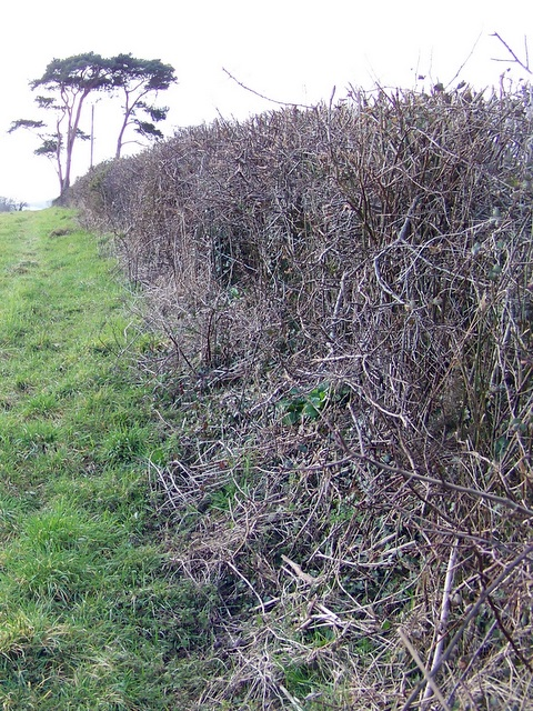 Footpath to Tincleton