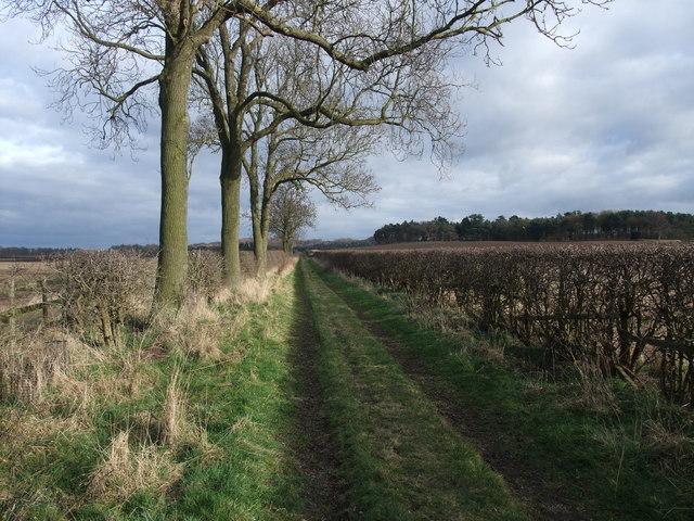 Lane west of Castle Farm
