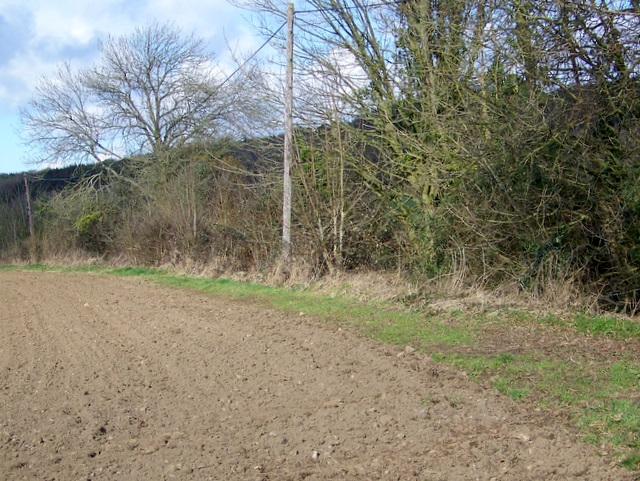 Footpath near Tincleton