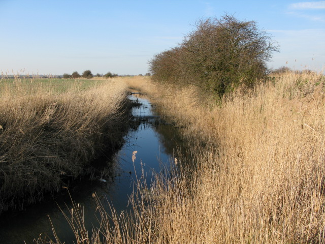Whitfield Sewer, looking NW across Chislet Marshes