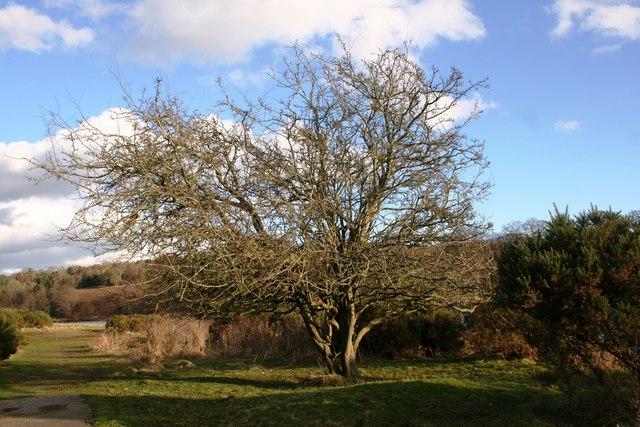 Riverbank Tree
