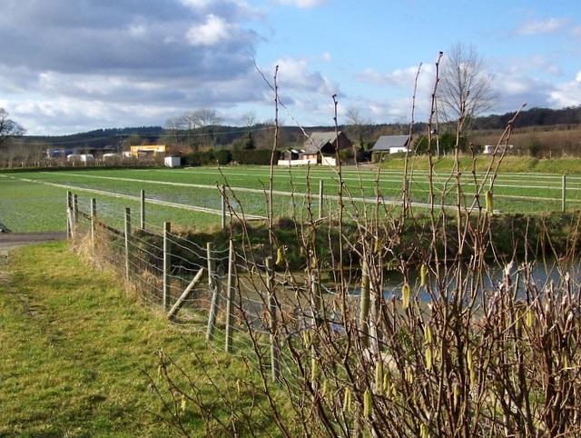 Watercress beds, Tincleton