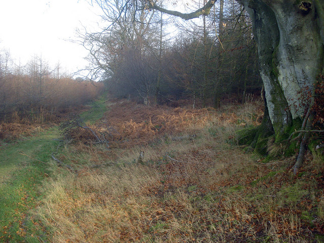 Path through Croft Wood