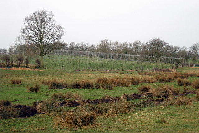 Hop Garden near Friezingham Farm