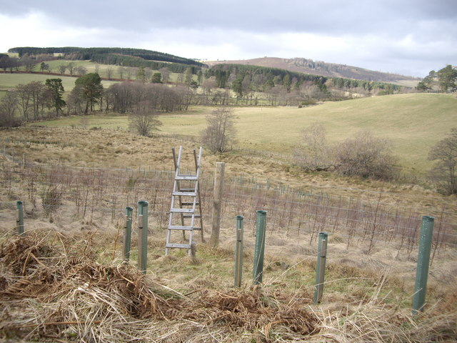 Stile over a deer fence