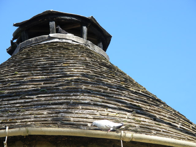 Doves on the Dovecote