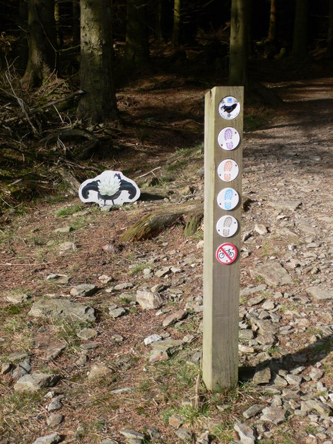 Grouse trail, Llandegla Forest