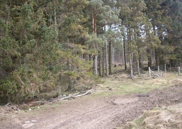 West Learney Wood
