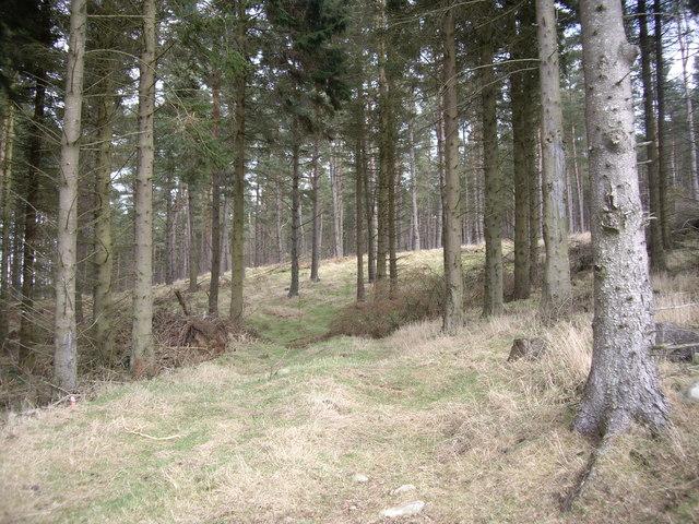 In West Learney Wood