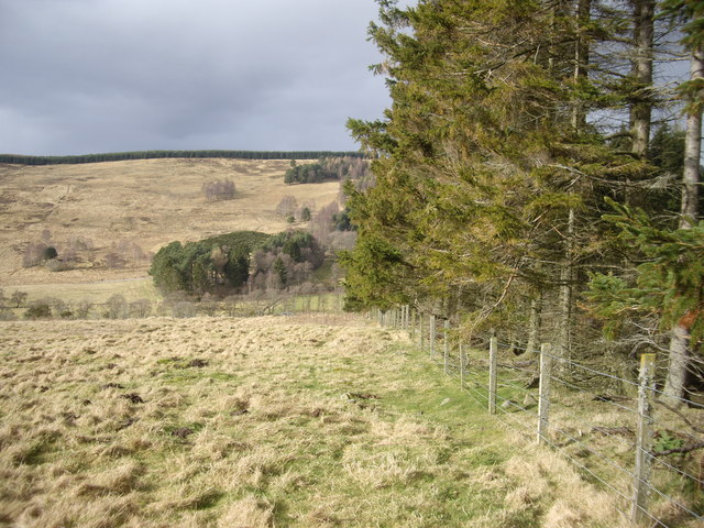 Edge of West Learney Wood