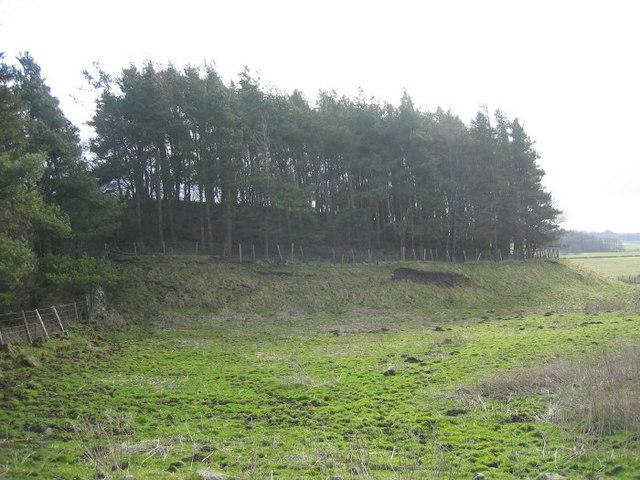 Copse near Great Bavington