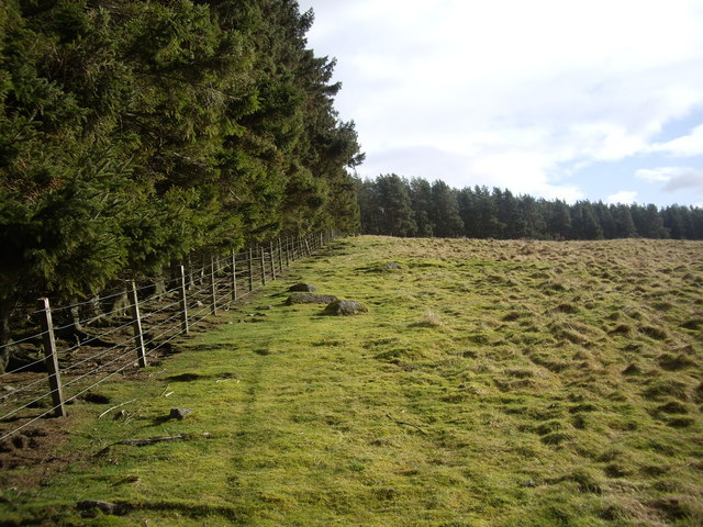 Angled edges to West Learney Wood