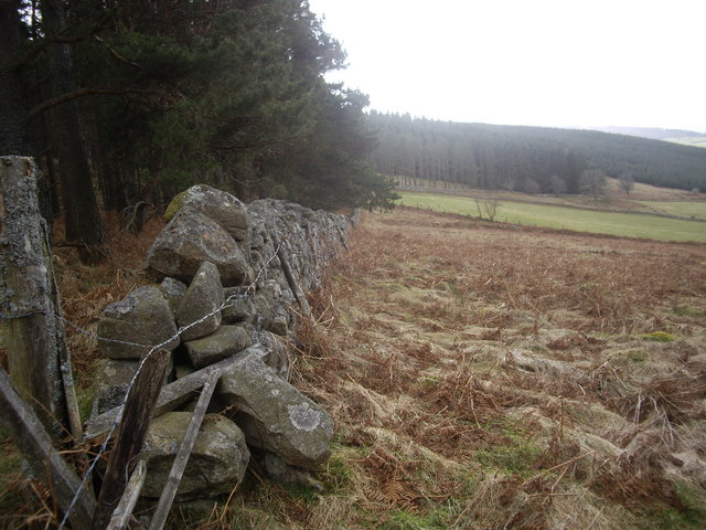 A walled edge to West Learney Wood
