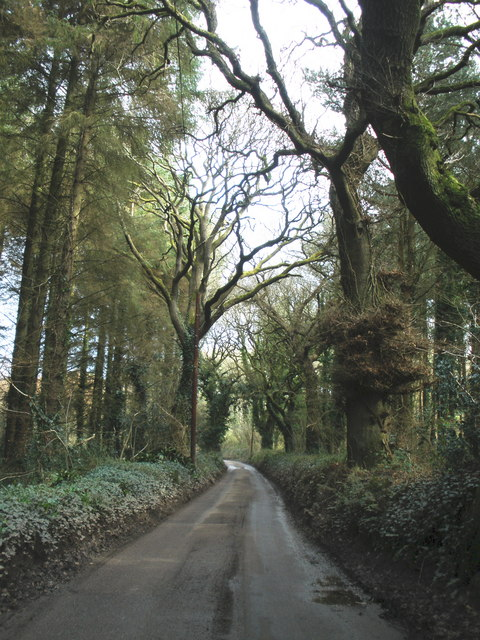 Minor road, through Knowle Hill Plantation