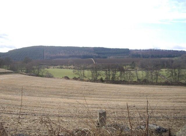 Field between Beltie Road and Beltie Burn
