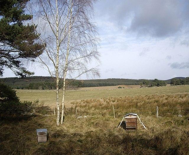 Beehives near Little Minew