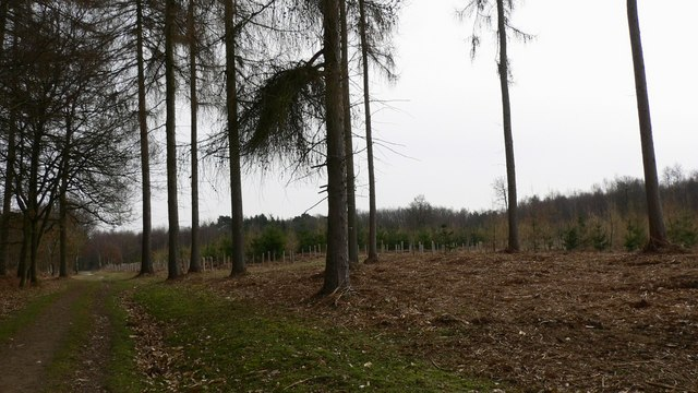 The Greensand Way in The Hurtwood