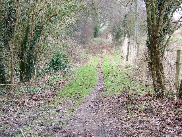 Bridleway to Lower Woodford