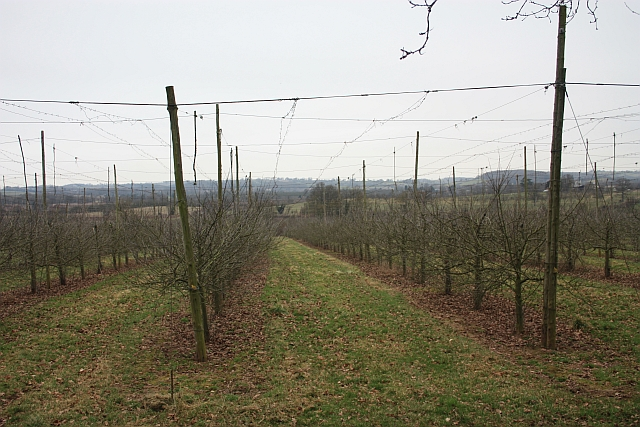Transformation, hop field to orchard, Staplow