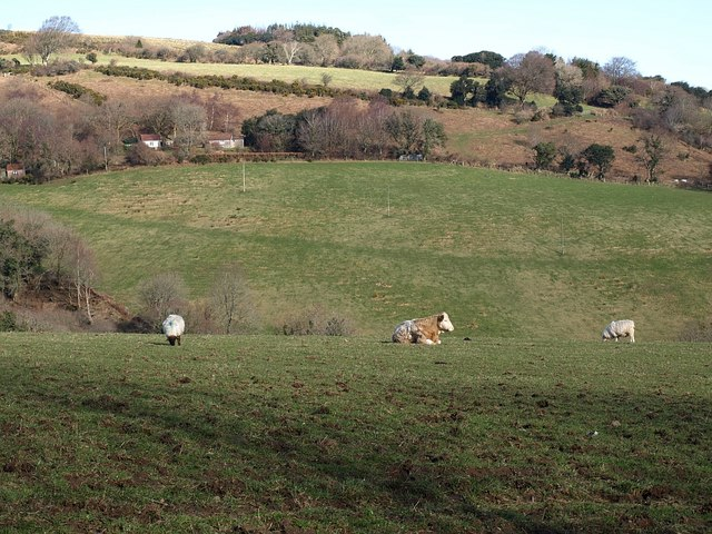 Across Great Combe from the south