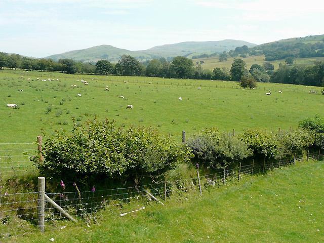 Farmland near the Afon Groes, Tregaron, Ceredigion