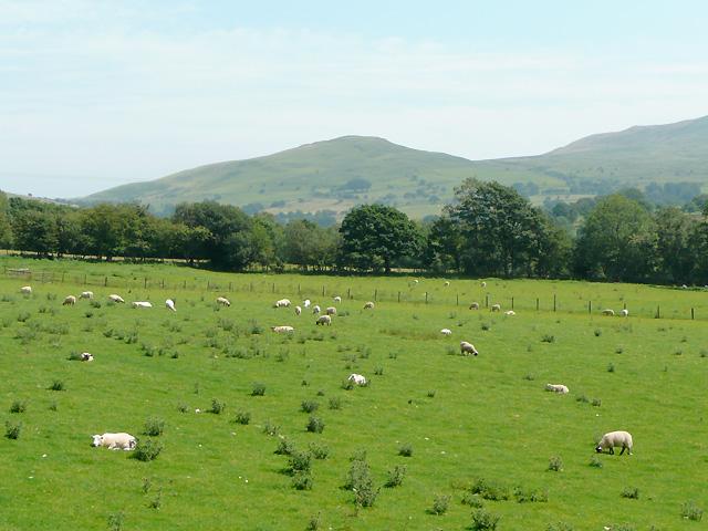 Across the fields to Y Bryn, near Tregaron, Ceredigion