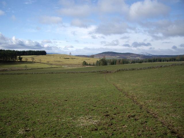Cowpath across field west of Minew