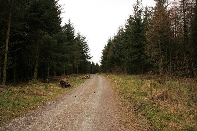 Snider Park Plantation